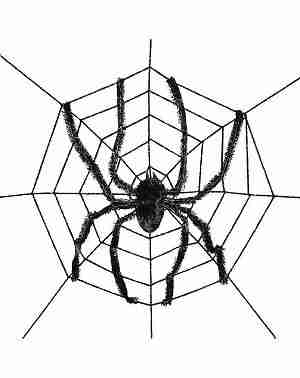 Giant Spider With Web
