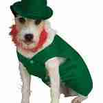 Irish Leprechaun Pet Costume